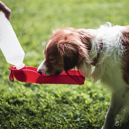 Vattenflaska med skål