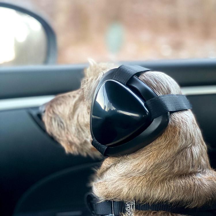 Hörselskydd för hundar