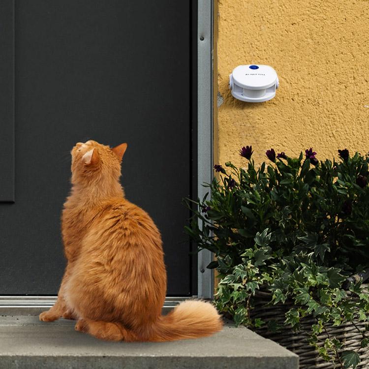 Dörrklocka för katter och hundar