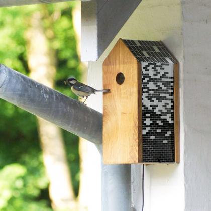 Fågelholk med webbkamera