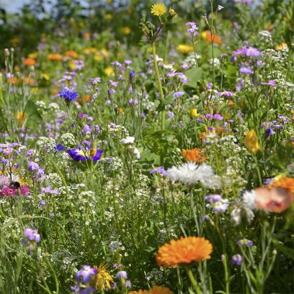 Turfquick blomsterland
