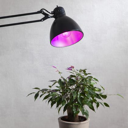 LED-Glödlampa till växter och odling