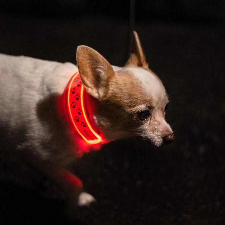 Reflexlampa till hunden