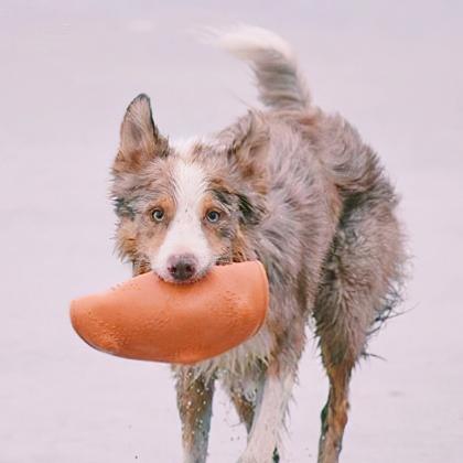 Frisbee till hunden