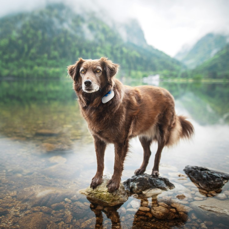 Tractive gps pet tracking device - Tacker fur polstermobel ...